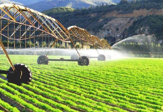 Сельскохозяйственный сектор